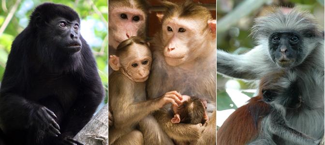 Resultado de imagen para primatology